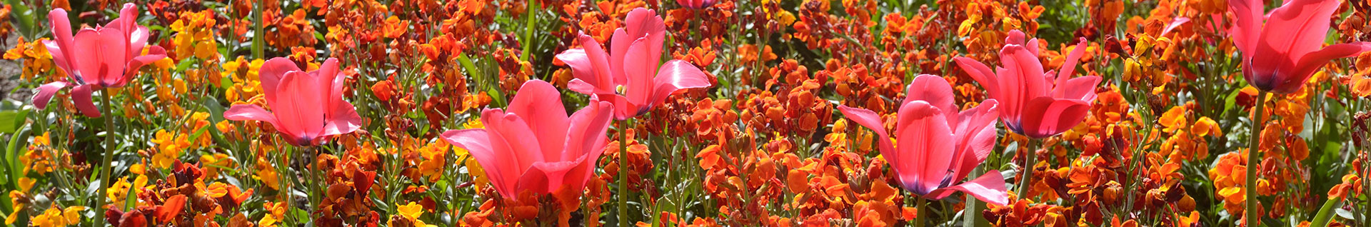 Photo of a flowerbed